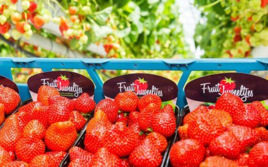 Fruit Juweeltjes 5