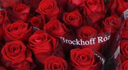 Rozenkwekerij B. Brockhoff 1